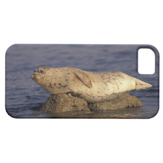 N.A., USA, California, Monterey.  Harbor Seal Barely There iPhone 5 Case