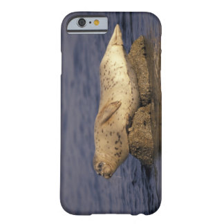 N.A., USA, California, Monterey.  Harbor Seal Barely There iPhone 6 Case
