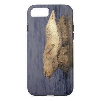 N.A., USA, California, Monterey.  Harbor Seal iPhone 8/7 Case