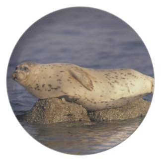 N.A., USA, California, Monterey.  Harbor Seal Plate