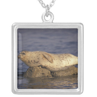 N.A., USA, California, Monterey.  Harbor Seal Silver Plated Necklace