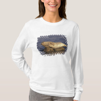 N.A., USA, California, Monterey.  Harbor Seal T-Shirt