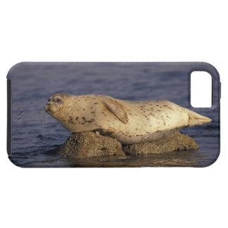 N.A., USA, California, Monterey.  Harbor Seal Tough iPhone 5 Case