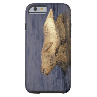 N.A., USA, California, Monterey.  Harbor Seal Tough iPhone 6 Case