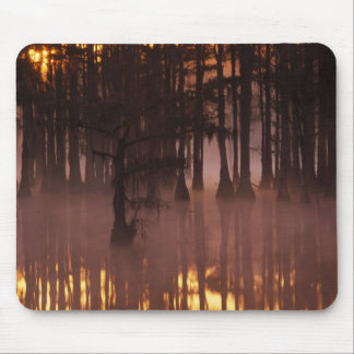 N.A., USA, Georgia, George Smith State Park. Mouse Mat