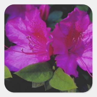 N.A. USA, Georgia, Savannah. Azalea in bloom. Square Sticker