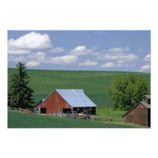 N.A., USA, Idaho, Latah county near Genesee. Photo Print