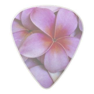 N.A., USA, Maui, Hawaii. Pink Plumeria blossoms. Acetal Guitar Pick
