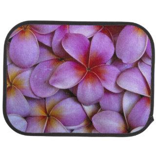 N.A., USA, Maui, Hawaii. Pink Plumeria blossoms. Car Mat