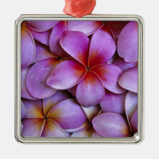 N.A., USA, Maui, Hawaii. Pink Plumeria blossoms. Christmas Ornament