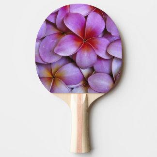 N.A., USA, Maui, Hawaii. Pink Plumeria blossoms. Ping Pong Paddle