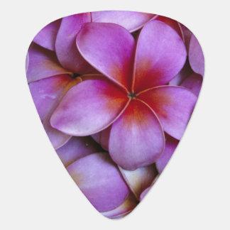 N.A., USA, Maui, Hawaii. Pink Plumeria blossoms. Plectrum