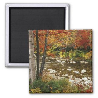 N.A., USA, New Hampshire, White Mountains, Fridge Magnets
