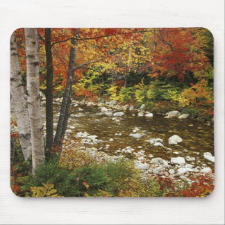 N.A., USA, New Hampshire, White Mountains, Mouse Mat