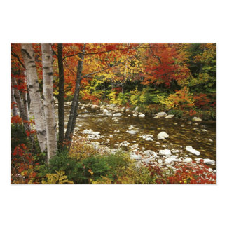 N.A., USA, New Hampshire, White Mountains, Photographic Print
