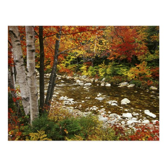 N.A., USA, New Hampshire, White Mountains, Postcard