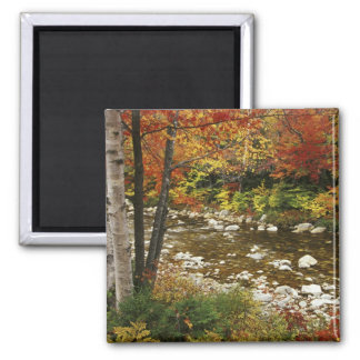 N.A., USA, New Hampshire, White Mountains, Square Magnet