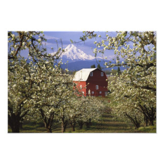 N.A., USA, Oregon, Hood River County. Red Photo Print
