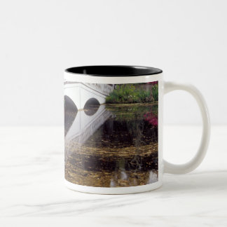 N.A., USA, South Carolina, Charleston.  Magnolia Two-Tone Coffee Mug
