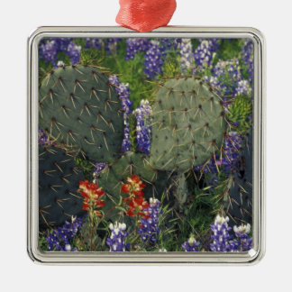 N.A., USA, Texas, Cactus surrounded by Christmas Ornament