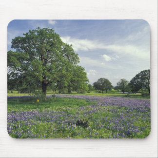 N.A, USA, Texas, Lake Buchanan, Oaks and Blue Mouse Mat