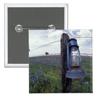 N.A., USA, Texas, Llano, Blue Lantern, Oak tree 15 Cm Square Badge
