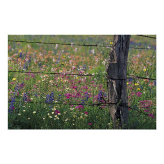 N.A, USA, Texas, Lytle, Fence post and Poster