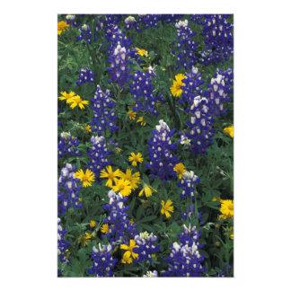 N.A, USA, Texas, Marble Falls, Blue Bonnets Photo Art