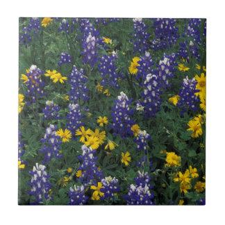 N.A, USA, Texas, Marble Falls, Blue Bonnets Tile