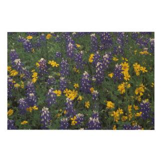 N.A, USA, Texas, Marble Falls, Blue Bonnets Wood Wall Decor
