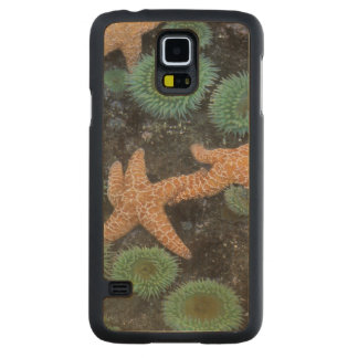 N.A., USA, Washington, Olympic National Park, 2 Carved Maple Galaxy S5 Case