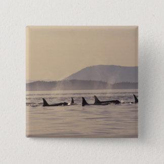 N.A., USA, Washington, San Juan Islands Orca 15 Cm Square Badge