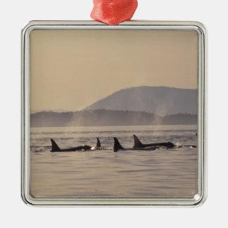 N.A., USA, Washington, San Juan Islands Orca Christmas Ornament