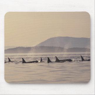 N.A., USA, Washington, San Juan Islands Orca Mouse Mat