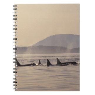 N.A., USA, Washington, San Juan Islands Orca Notebook