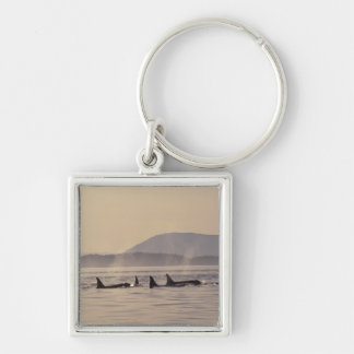 N.A., USA, Washington, San Juan Islands Orca Silver-Colored Square Key Ring