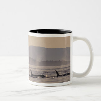N.A., USA, Washington, San Juan Islands Orca Two-Tone Coffee Mug