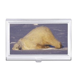 NA, Canada, Manitoba, Churchill, Polar bear Business Card Cases