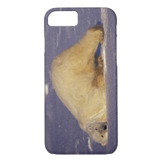 NA, Canada, Manitoba, Churchill, Polar bear iPhone 8/7 Case