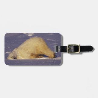 NA, Canada, Manitoba, Churchill, Polar bear Luggage Tag