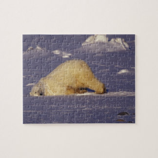 NA, Canada, Manitoba, Churchill, Polar bear Puzzle