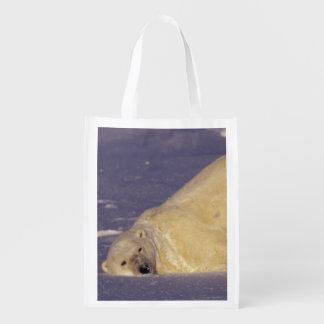 NA, Canada, Manitoba, Churchill, Polar bear Reusable Grocery Bag