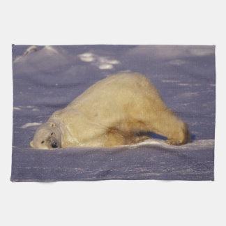 NA, Canada, Manitoba, Churchill, Polar bear Tea Towel