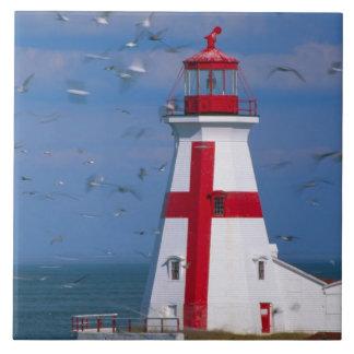 NA, Canada, New Brunswick, Campobello Island. 8 Tile
