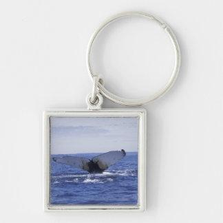 NA, Canada, Newfoundland, Trinity Bay. Humpback Key Ring