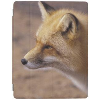 NA, Canada. Red Fox iPad Cover