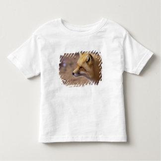 NA, Canada. Red Fox Tshirt