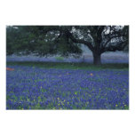NA, Texas, Devine, Oak and blue bonnets