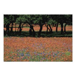NA, Texas, Texas Hill Country, Buchan Dam, Photo Print