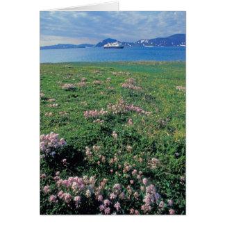 NA, USA, Alaska, Aleutian Island, Scenic with Card